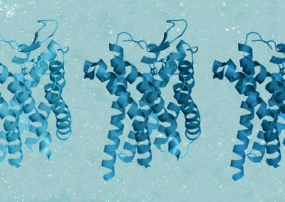 MST and nanoDSF help to design detergent free chemokine receptors