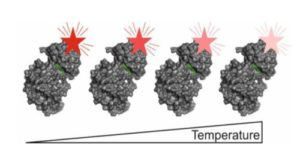 MicroScale Thermophoresis, Thermophoresis, Affinity, Molecular Interaction, Binding Strength, MST